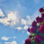 空 太陽 薔薇 生命力 強さ